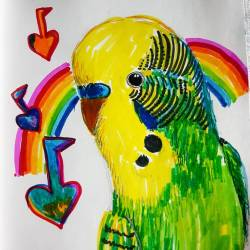 Budgie rainbows #draw #art #doodles #rainbow #inkpen #drawing #sketch #perthcreatives #perthart #perthartist #love #budgie