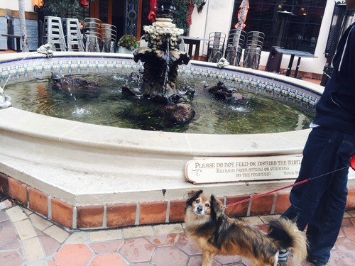 dog friendly Santa Barbara