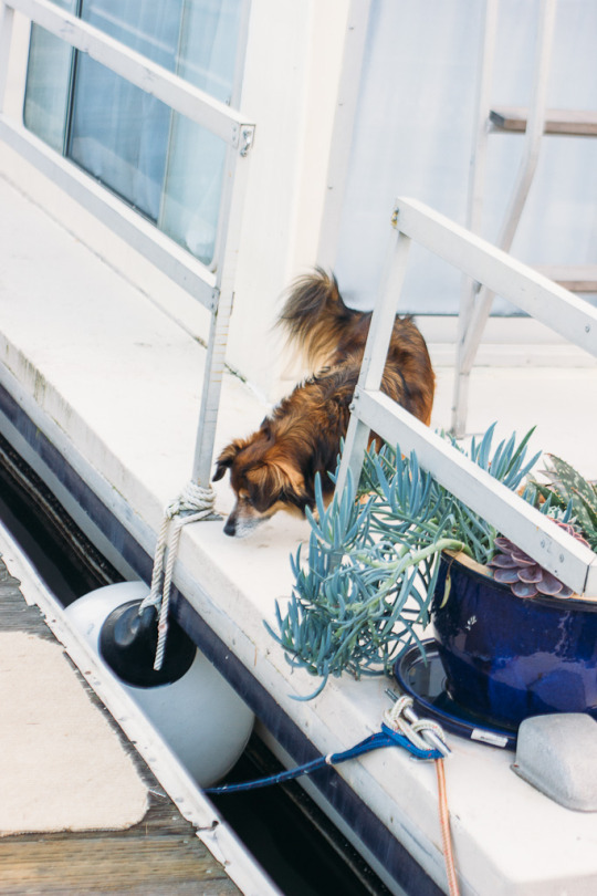 Sausalito Bay Area airbnb pet friendly staycation