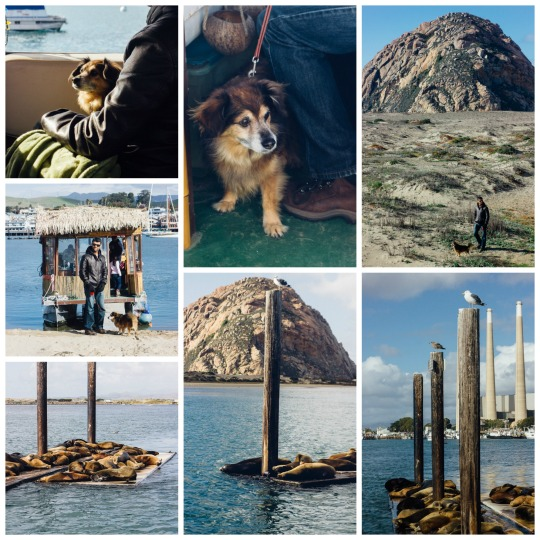 dog friendly San Luis Obispo, dog friendly guide to SLO, where to take your dog on California's central coast, Morro Bay, dog friendly restaurants in San Luis Obispo, dog friendly activities in San Luis Obispo, dog friendly hotels in San Luis Obispo