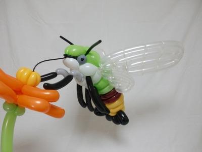 オオスカシバ Pellucid hawk moth 2016.2.28