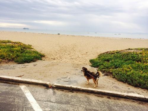 santa Barbara Travel Dogs pets California