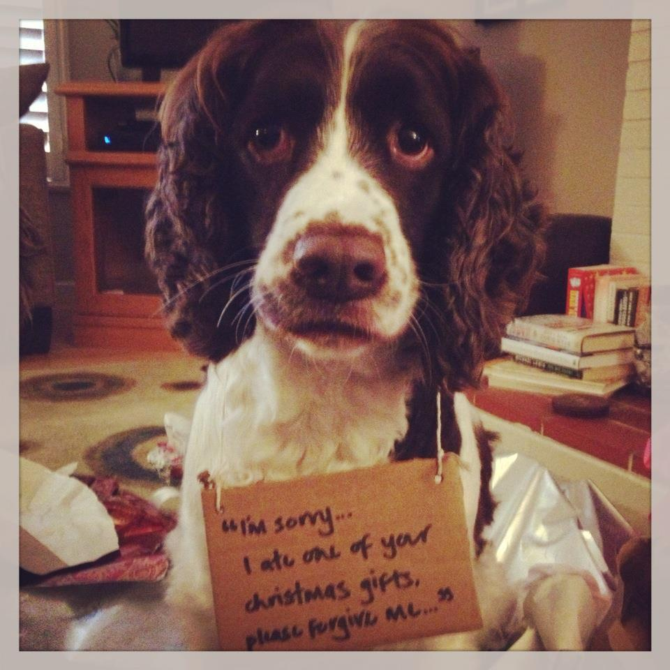 Dog Shame Im Sorry I Ate One Of Your Christmas Gifts