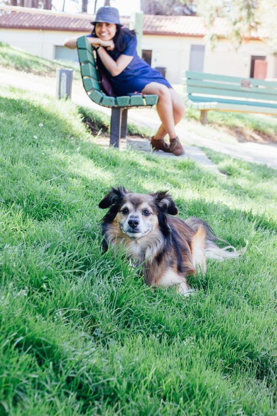dog friendly San Francisco, dog friendly guide, dog friendly spots in San Francisco, where to take your dog in San Francisco, dog friendly parks in San Francisco, Mountain Lake Park, dog friendly SF parks, dog parks in SF, SF dog parks, San Francisco dog parks