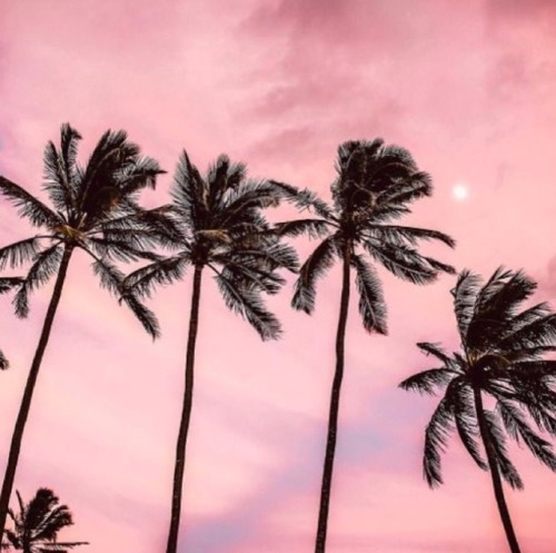 You can also upload and share your favorite aesthetic purple desktop wallpapers. palm trees on Tumblr