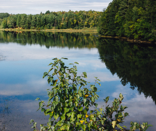 Vermont Fall foliage new England fall colors travel, Vermont in Fall, Vermont Fall foliage drives, Lake Lamoille