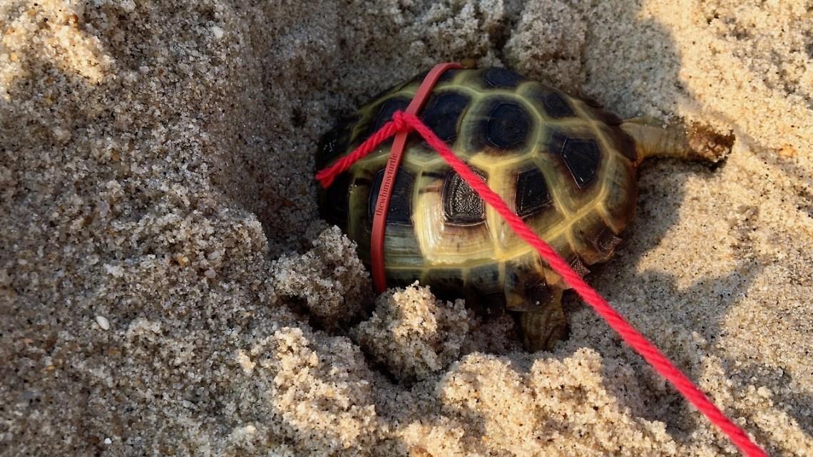Beach sand is so much easier to dig through than dirt!