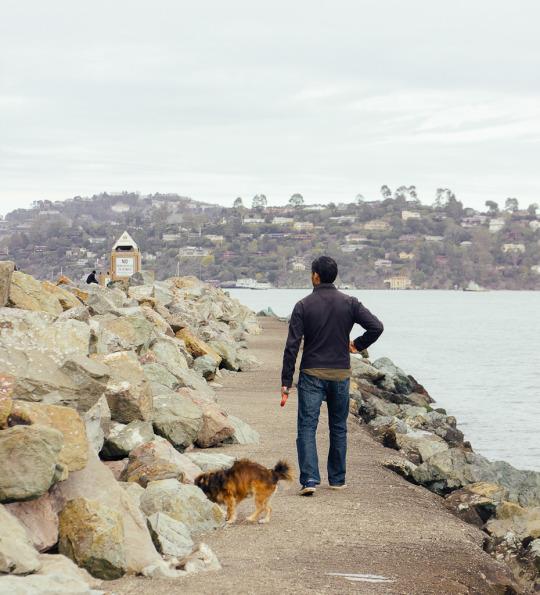 Sausalito Bay Area pet friendly staycation
