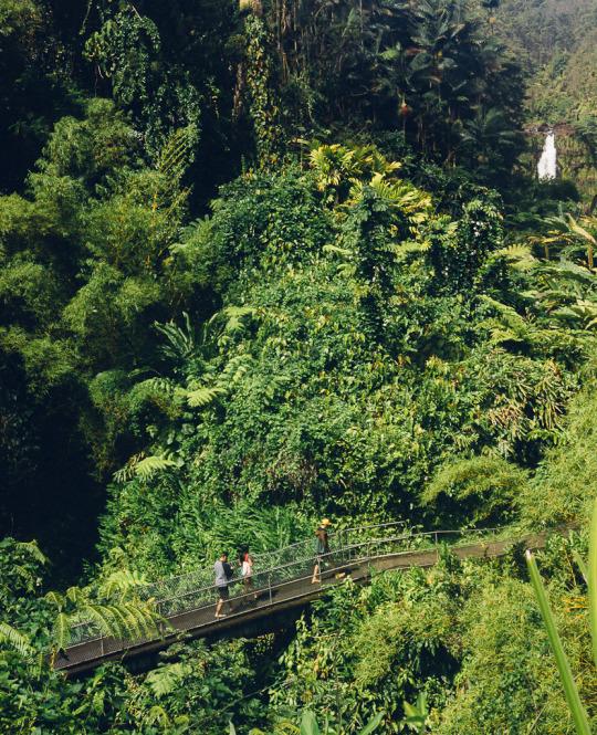 Akaka fall state park, Big Island, what to do in Big Island, three days in Big Island