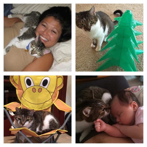 To my first born son Spam, Thank you for being the most wonderful furbaby ever. From purring so loudly every time you went to the vet so the doctors had a hard time listening to your heart to being Emma's first friend and companion, you filled our...