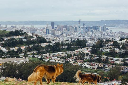 dogs pets travel park san francisco mount davidson
