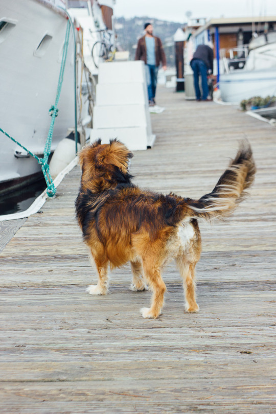 Airbnb sausalito house boat pets rental