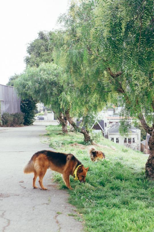 dog friendly San Francisco, dog friendly guide, dog friendly spots in San Francisco, where to take your dog in San Francisco, dog friendly parks in San Francisco, Alta Plaza Park, dog friendly SF parks, dog parks in SF, SF dog parks, San Francisco dog parks