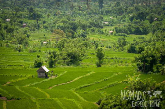 bali indonesia travel adventure culture journey indo pacific explore discover rice fields planting harvest food crop green