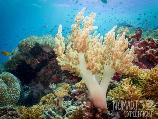 tropical coral reef photography underwater animal filming scuba diving indonesia Komodo national park indo pacific blue animal wildlife