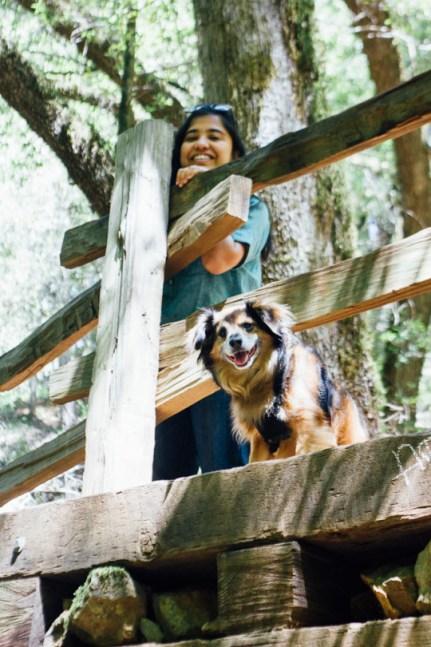 Waterfall hiking trails Dog friendly California Bay Area