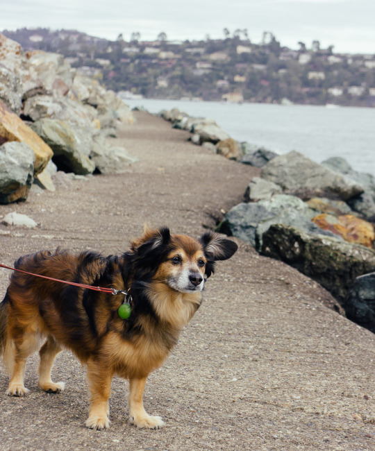 Sausalito Bay Area pet friendly staycation
