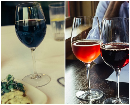 dog friendly wineries in Mendocino, dog friendly wine tasting in Mendocino, pacific star winery