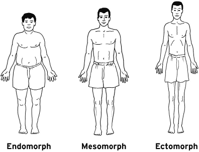 "teppelin: "" Three common male body types: Endomorph (often ""chubbier"" men) • Soft and round body • Gains muscle and fat very easily • Is generally short and ""stocky"" • Round physique • Finds it hard to lose fat • Slow metabolism Mesomorph (the..."