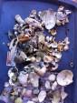 Sea shell treasures