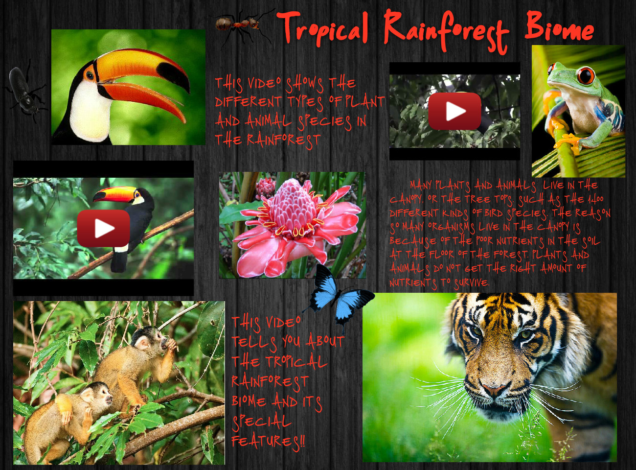Tropical Rainforest Biome Biome Canopy Ecosystem En