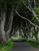 Northern Ireland Road with Tree tunnel