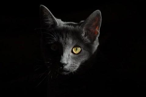 6 mitos sobre gatos