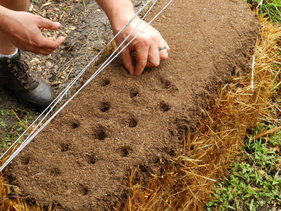 straw bale gardens frosting the cake 6ftmama com