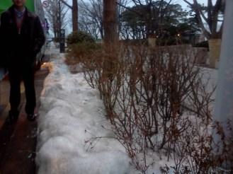 Nieve everywhere