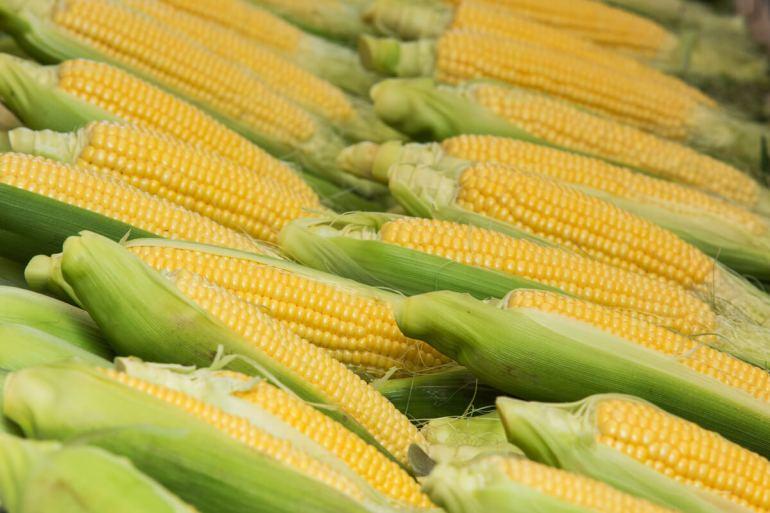 Corn Comes Calling Commodity