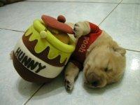 Drunk Pooh