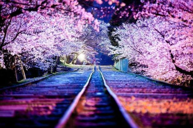 15 Most Beautiful Photographs Of The Japanese Streets