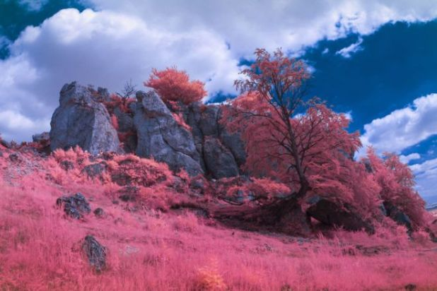 A Photographer Creates A Magical World With Infrared Photography