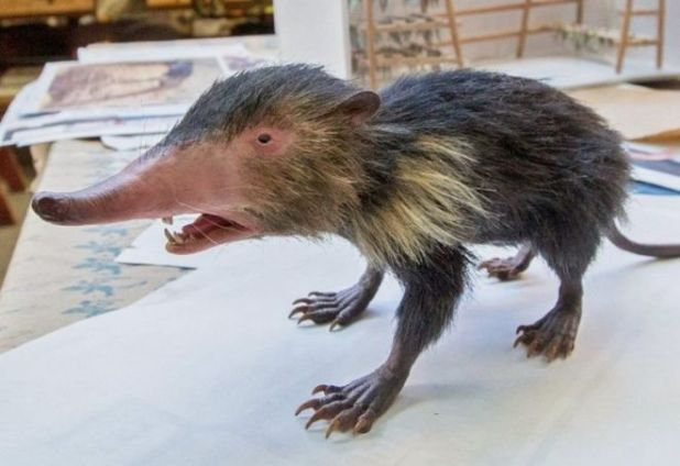 14 Most Weird And Surprising Animal Species