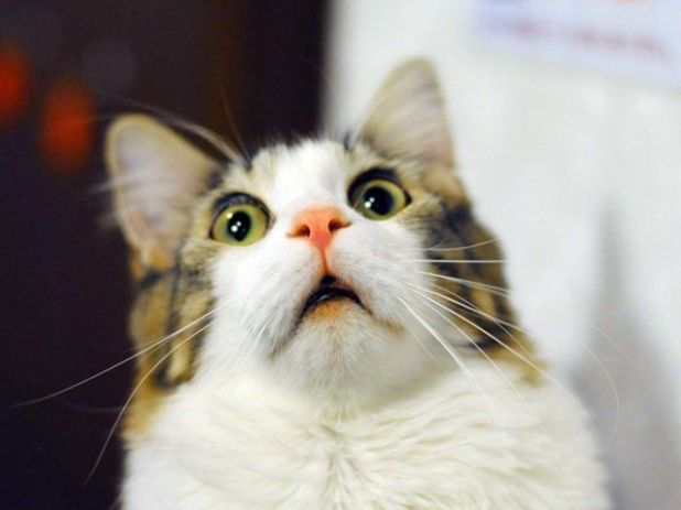 These Surprised Cats Will Make You Laugh