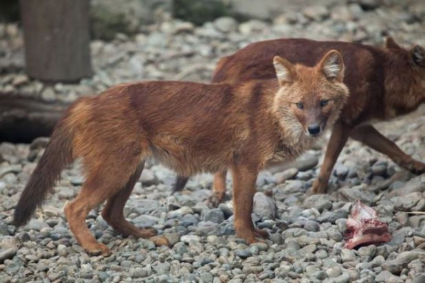 Learn How These 15 Animals Communicate With Each Other