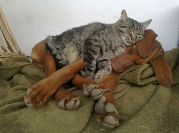 Cats Sleeping On Dogs In Funniest Pictures