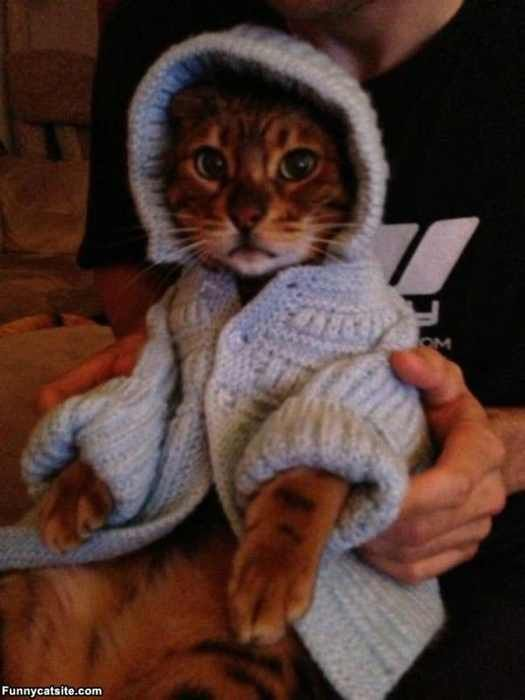 Cats Look Really Adorable In Sweaters