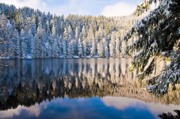 33 Stunning Photographs From The Black Forest