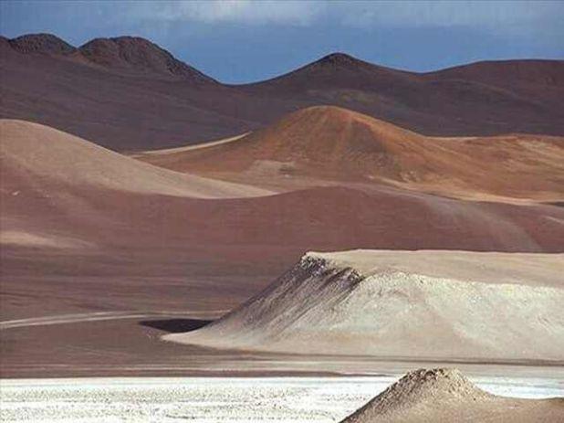 The Beautiful Desert Flowers Of Atacama