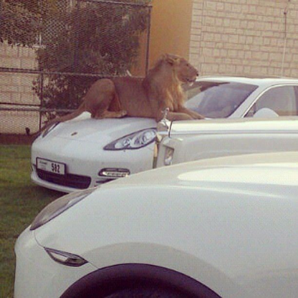 25 Things That Happen Only In Dubai