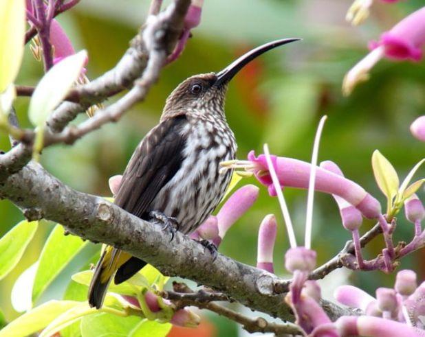 15 Beautiful Birds Found In The Borneo Region