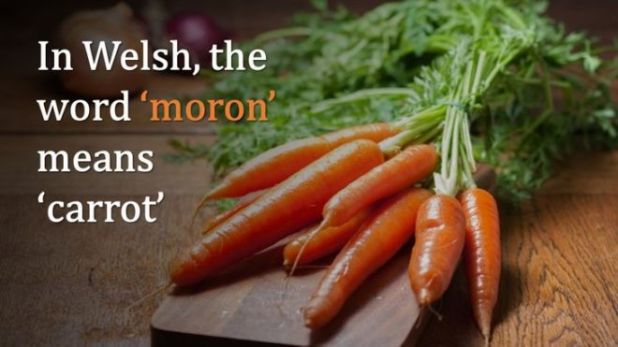 15 English Words That Have A Different Meaning In Other Languages