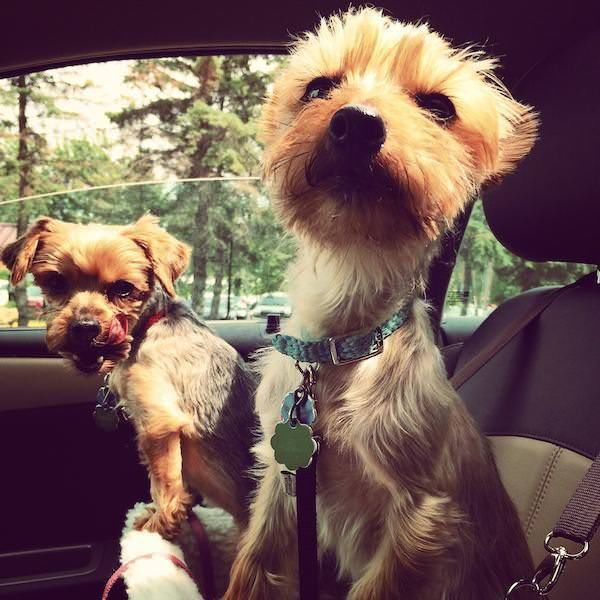 20 Crazy And Funny Pictures Of Dogs