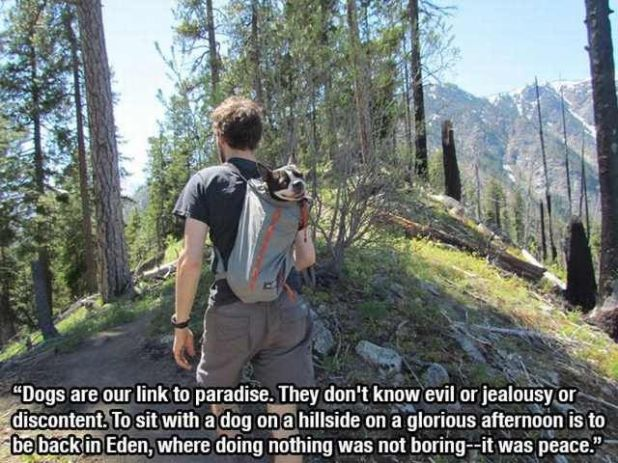 12 Touching Quotes About Dogs