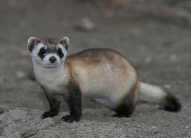 13 Rare Animals That Exist Around The World