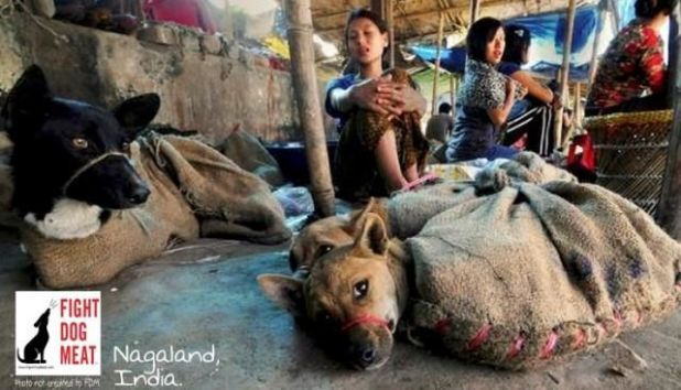 Asia's SHOCKING Live Animal Market In Vietnam