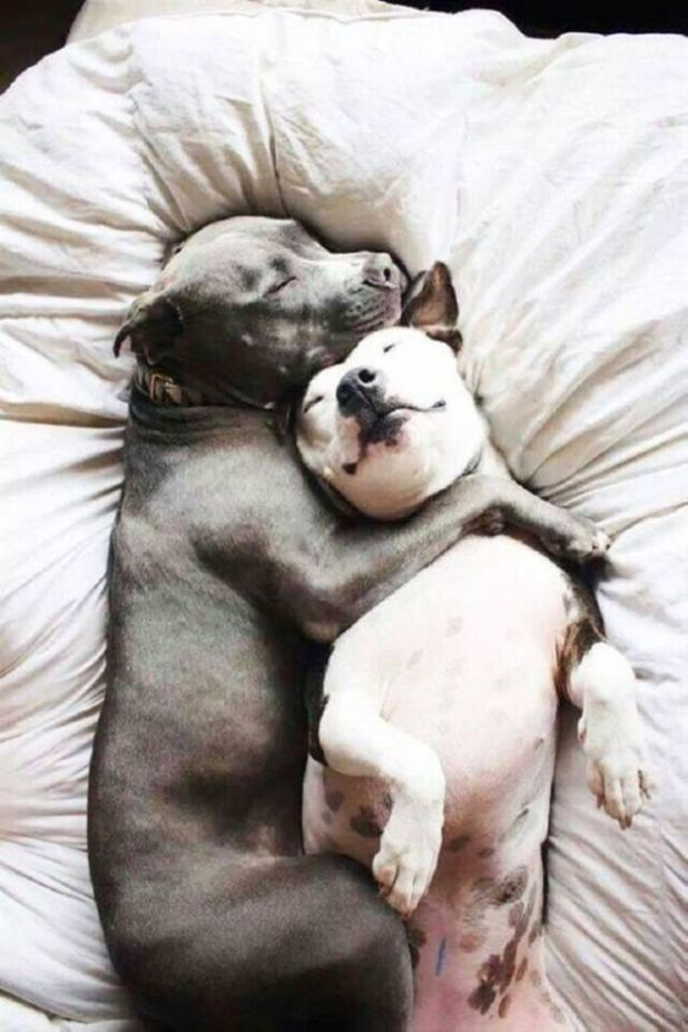 Adorable Dogs With Their Best Friends