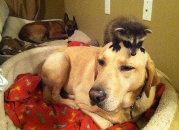 How Animal Kids Annoy Their Funny Parents