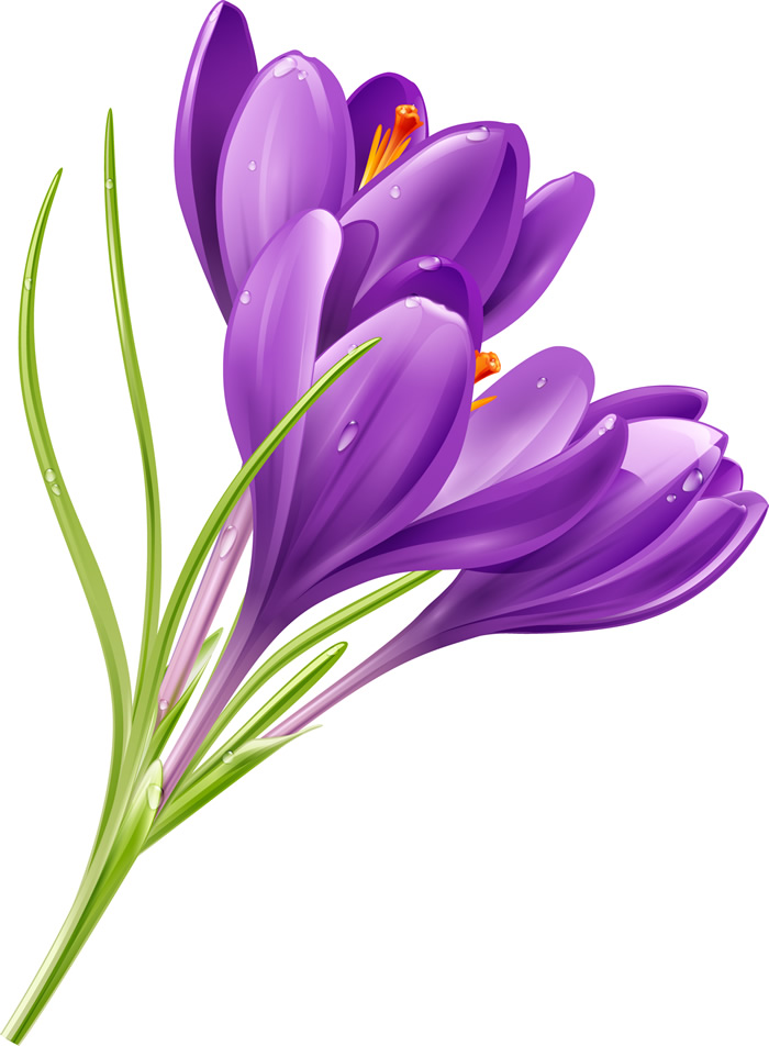 Purple Flowers   Free Vector Graphic Download Purple Flowers